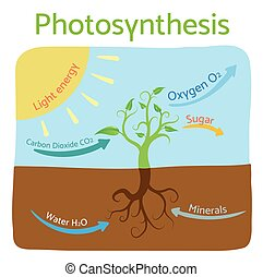 Photosynthesis diagram. Schematic vector illustration of the photosynthetic process.