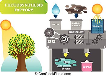 Photosynthesis factory infographic vector illustration for...