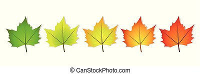 photosynthesis five coloful leaves vector illustration EPS10