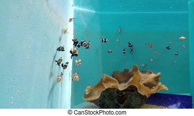 Phuket aquarium fish - Phuket aquarium stripped fish farm