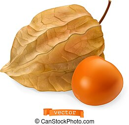 Physalis fruit with husk, 3d realistic vector icon