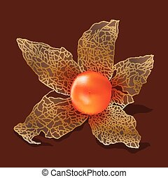Physalis isolated from the background. Vector illustration.