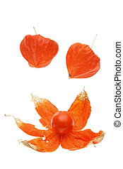 physalis  - Physalis isolated on white background