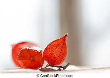physalis red against the window in the morning on the table