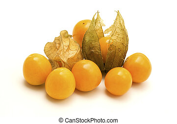 Physalis on a white background