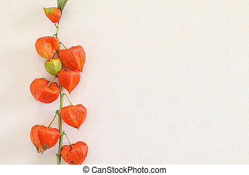 physalis hanging on the wall