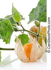 Physalis - Cape gooseberry (physalis) fruit on white...