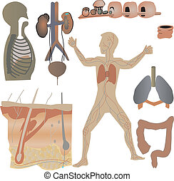 Physical Parts of the body