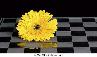 più basso, vetro, nero, scacchi, arancia, cartoncino bianco