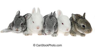 piątka, mały, króliki, pokotem