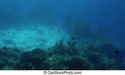 piękne życie, dookoła, losy, koral, bottom., głęboki, ocean...