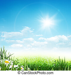 piękno, lato, abstrakcyjny, środowiskowy, tła, z, stokrotka, kwiaty