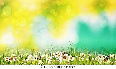 piękno, letni dzień, na, przedimek określony przed rzeczownikami, meadow., abstrakcyjny, kasownik, tła, fo