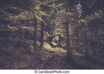 piękny, ścieżka, las