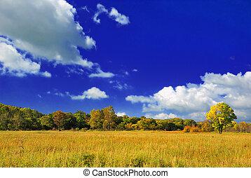 piękny, autumn krajobraz
