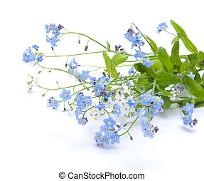 piękny, błękitne kwiecie