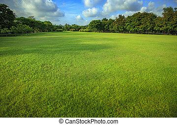 piękny, batyst, lekki, park, rano, zielona trawa, publiczność