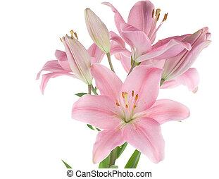 piękny, biała lilia, odizolowany