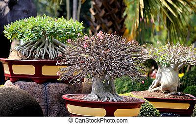 piękny, bonsai, zdumiewający