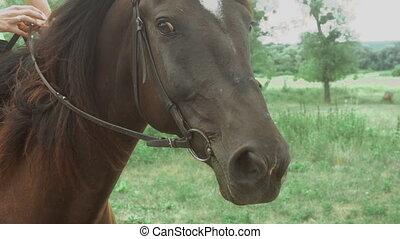 piękny, brunatny koń, kobieta, młody, grzbiet koński, siada