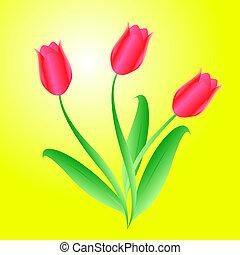 piękny, bukiet, wektor, trzy, tulipany