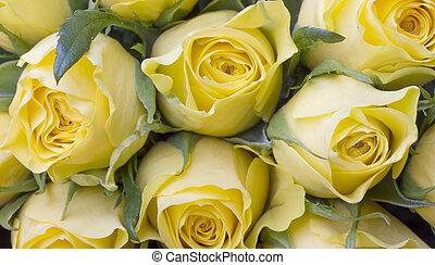 piękny, bukiet, wizerunek, do góry, żółte róże, zamknięcie