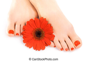 piękny, czerwony, manicured, paznokcie, z, gerbera