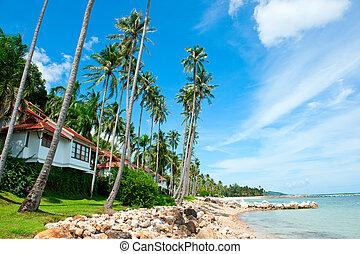 piękny, dom, z, dłoń drzewa, na plaży