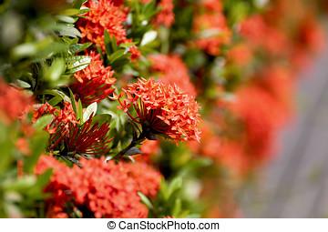 piękny, flora