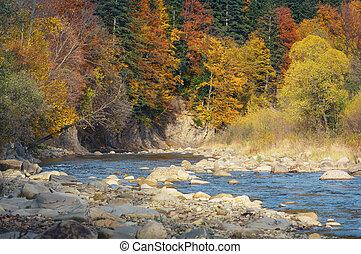 piękny, góra, autumn las, potok
