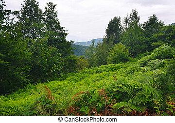 piękny, góra, las, polana, paproć