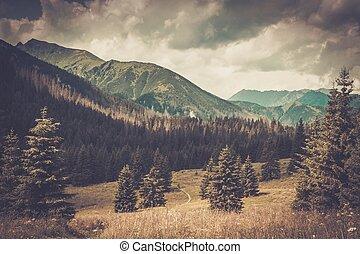 piękny, góra, tatras, las