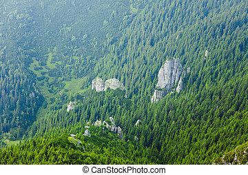 piękny, góra, zielony las