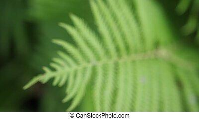 piękny, garden., powolny, liść, lato, motion., paproć, time.
