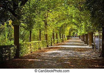 piękny, jesień, park, aleja