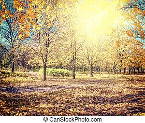 piękny, jesień, parkland