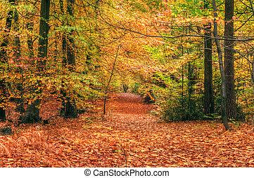piękny, jesień, upadek, las, scena