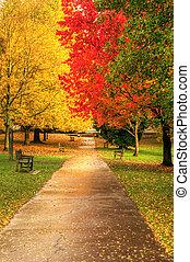 piękny, jesień, upadek, scena, las
