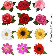 piękny, komplet, illustration., barwny, cielna, flowers., wektor