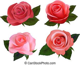 piękny, komplet, roses., illustration., wektor