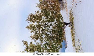 piękny, krajobraz., pionowy, mrożony, drzewa., bardzo,...