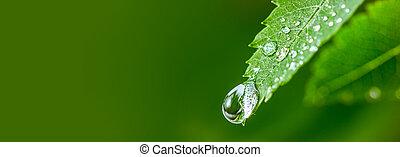 piękny, krople, środowisko, water., liść, concept., leaf., cielna, kropla, woda, zielony