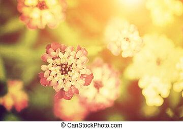 piękny, kwiat, natura, rocznik wina, sunlight., style.