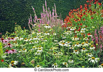 piękny, kwiaty, łąka, ogród