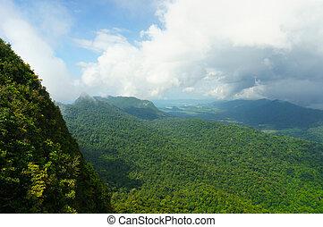 piękny, langkawi, góry, drzewo, mgła, kołyszący, pokryty
