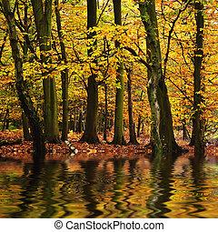 piękny, las, krajobraz, z, wibrujący, jesień, spaście porę,...