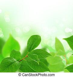 piękny, liście, brzeg