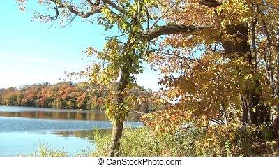 piękny, liście, opuszczenie, jezioro, upadek
