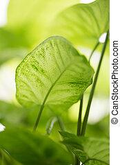 piękny, liście, zielony