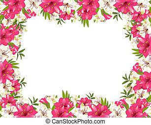 piękny, lilia